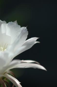 2006-cactus_3415